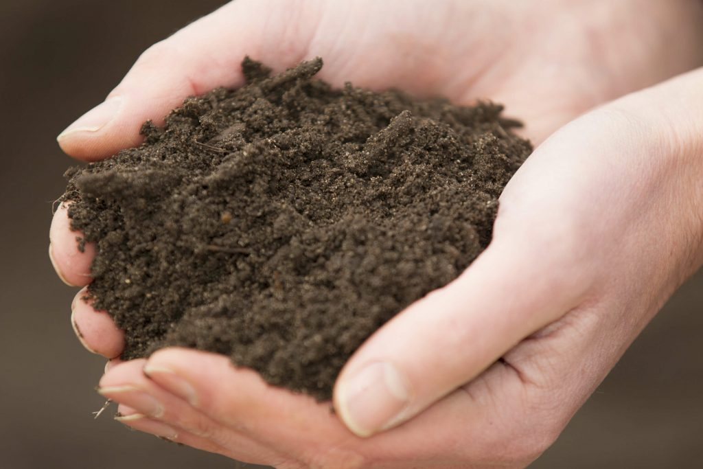 Picture of hands holding soil, earth